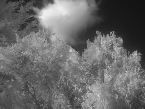 Infrared #4